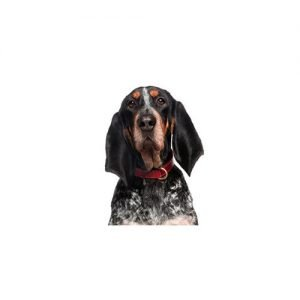 The Barking Boutique Bluetick Coonhound