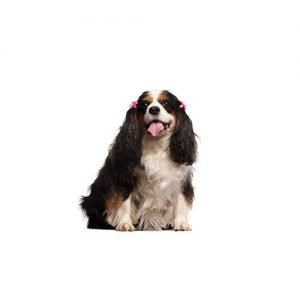 The Barking Boutique English Toy Spaniel