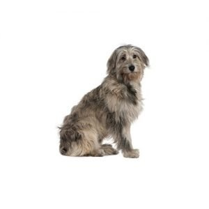The Barking Boutique Irish Wolfhound