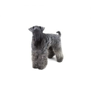The Barking Boutique Kerry Blue Terrier