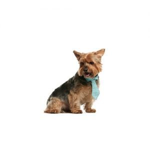 The Barking Boutique Norwich Terrier