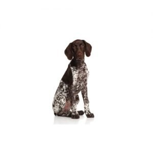 The Barking Boutique Pointer