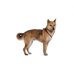 The Barking Boutique Shiba Inu