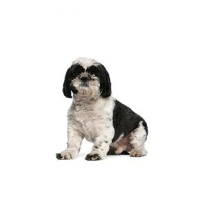 The Barking Boutique Shih Tzu