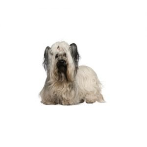 The Barking Boutique Skye Terrier