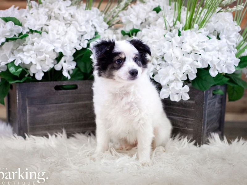 Ausskimo-Male-White / Black-2474065-The Barking Boutique