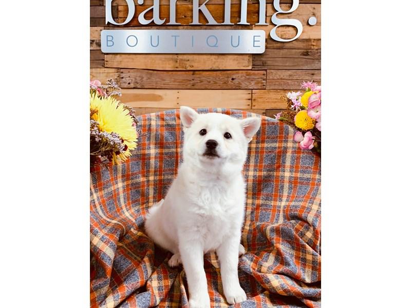 Shibamo-Female-White-2899357-The Barking Boutique