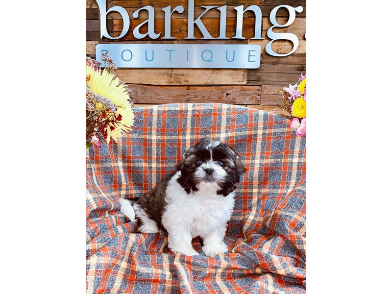 Havashu-Male--2899361-The Barking Boutique
